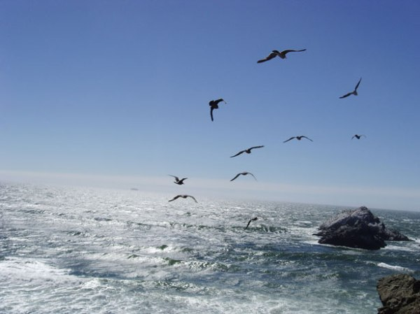 seagulls-flying-over-ocean