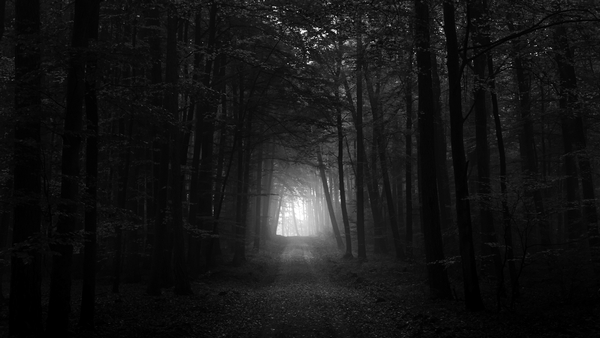 dark-forest-path-wallpaper