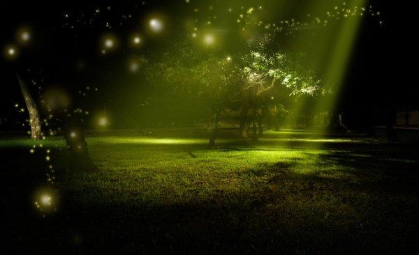 fairyforest-biostm