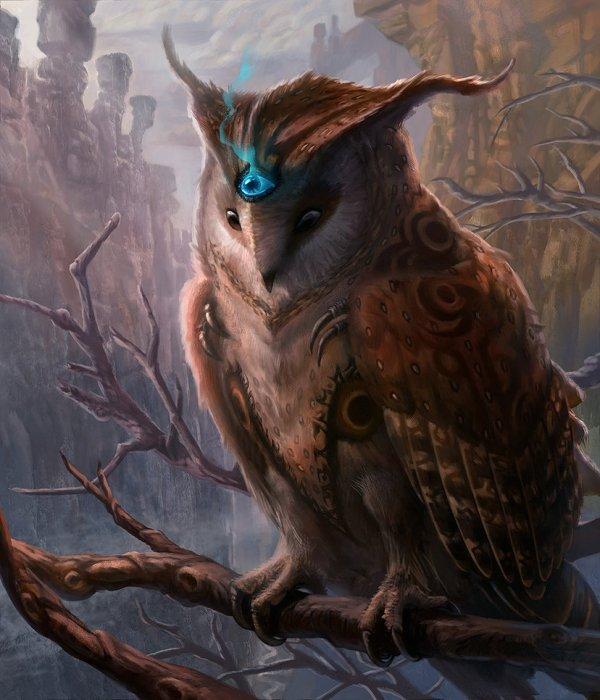 Owl-jubjubjedi