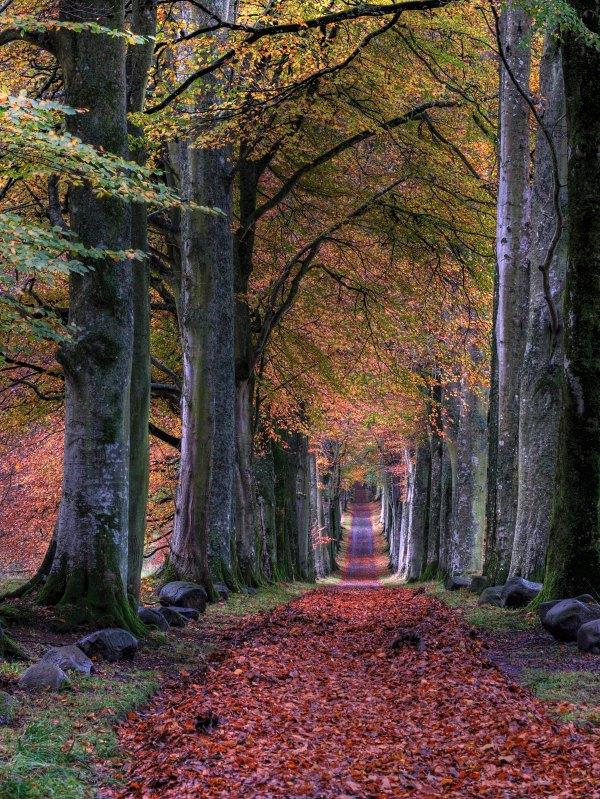 Autumn1JohnMccann