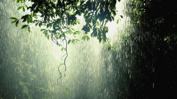raining-forestnation-com-raining