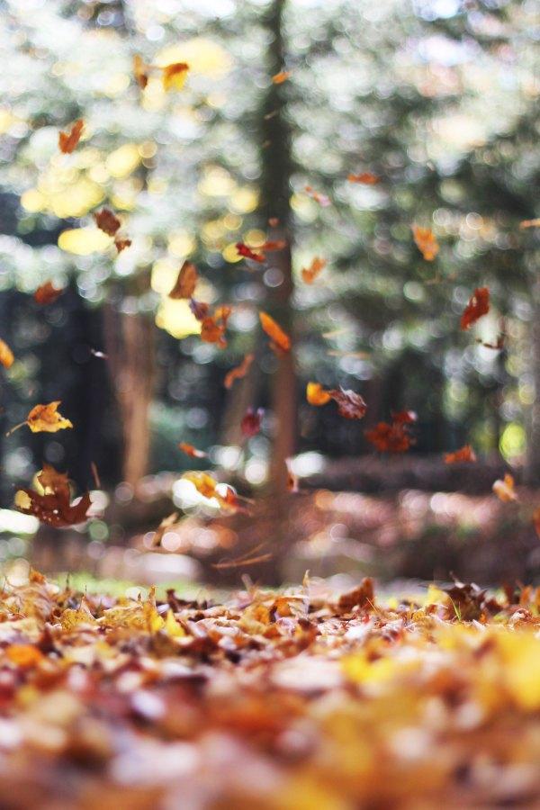 Autumn-AutumnMott