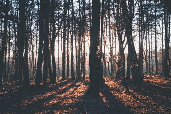 TreeShadows-SimsonPetrol