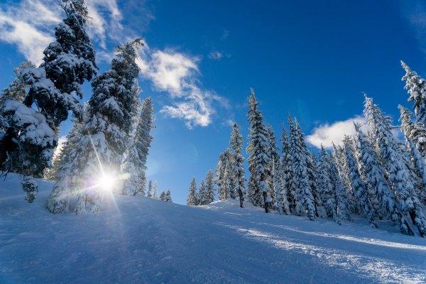 WinterSun-WilStewart