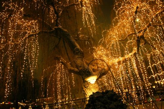 light-tree-Tivoli