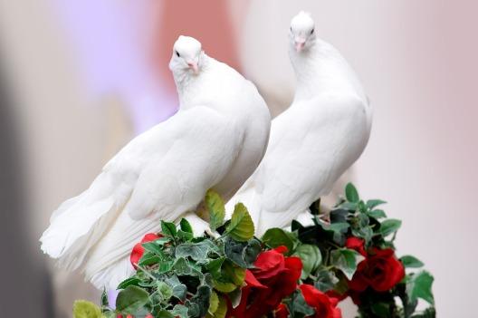 doves-Rothart